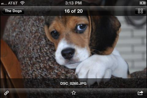 iOS için Dropbox otomatik fotoğraf yükleme ve galeri görünümüyle güncellendi