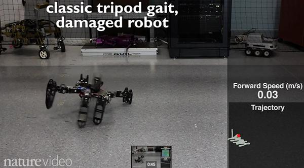 Yaralansa da yoluna devam edebilen robot teknolojisi!