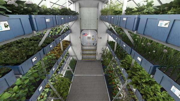 Astronotlar uzayda yetiştirilen sebzeleri ilk kez yemeye hazırlanıyorlar