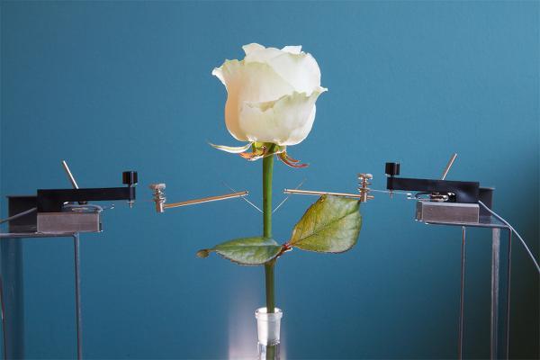 Bu güller robot!