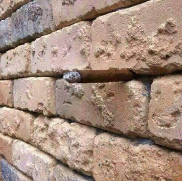 Tuğla duvardaki optik illüzyon interneti salladı