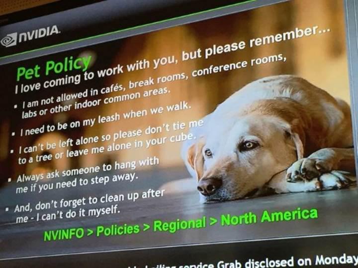 Nvidia çalışanları, köpeklerini şirkete götürebiliyor
