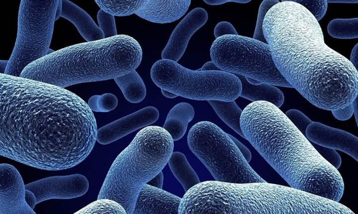 Bakteriler farklı türler ile iletişime geçmek için elektriği kullanıyor