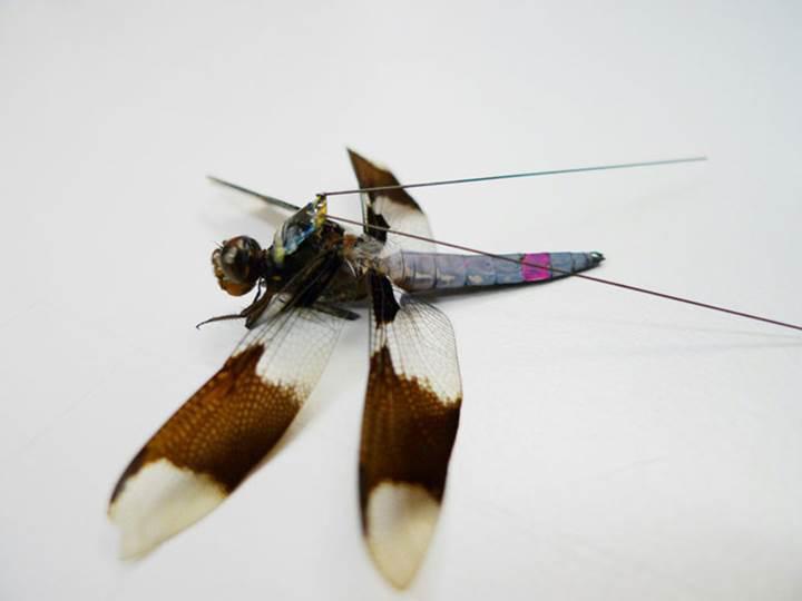 Böcekleri uzaktan kontrol edebilmek mümkün mü?