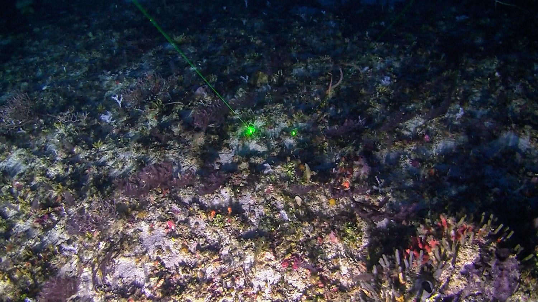 Amazon Nehrindeki petrol sahası saklı mercan kayalıklarının keşfiyle adını duyurdu