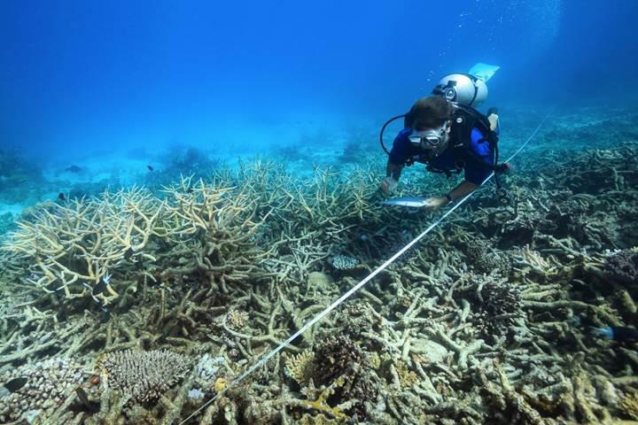 Büyük Set Resifi'ni kurtarmak için son plan yapay bulutlar