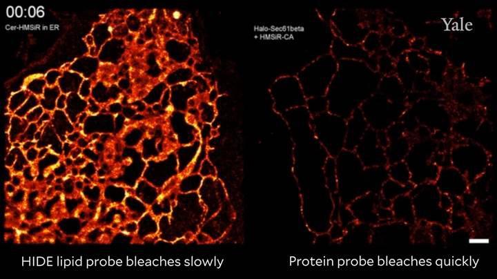 Mikroskobik hücre görüntüleri daha uzun süre incelenebilecek