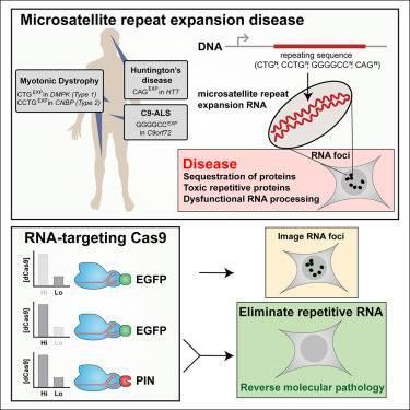 RNA düzenlemesiyle ALS tedavisi mümkün