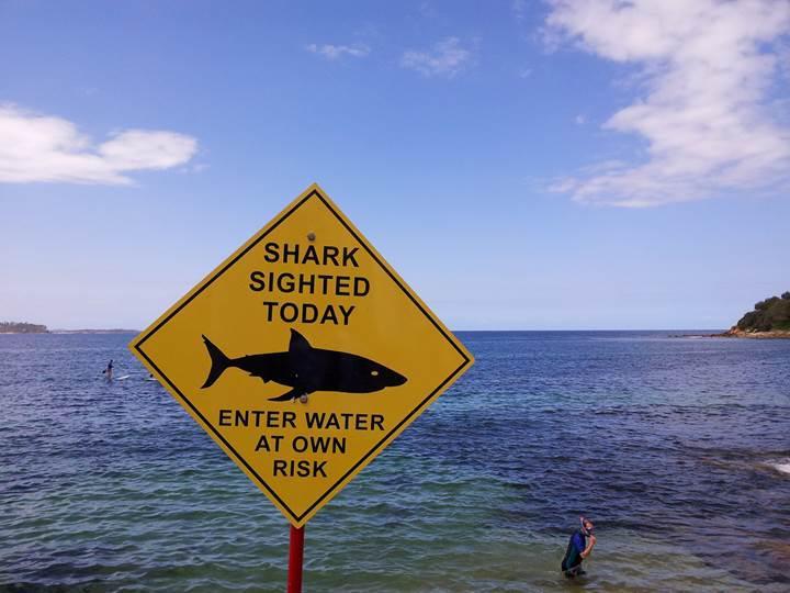 Drone'lar Avustralya kıyılarında köpek balıklarını takip edecek