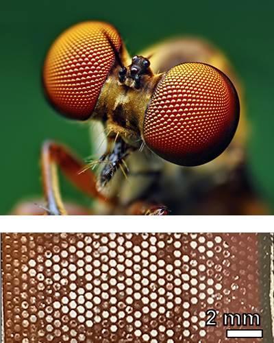 Böceklerin gözünden ilham alan güneş paneli