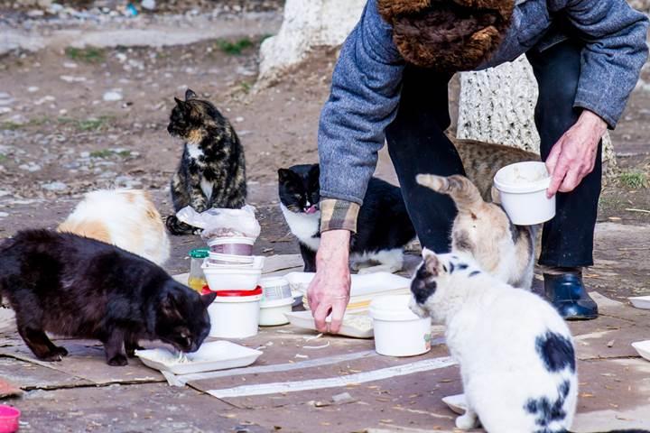 [Güncellendi] Gearbest'ten hayvansever DH üyelerine 50 özel hediye!