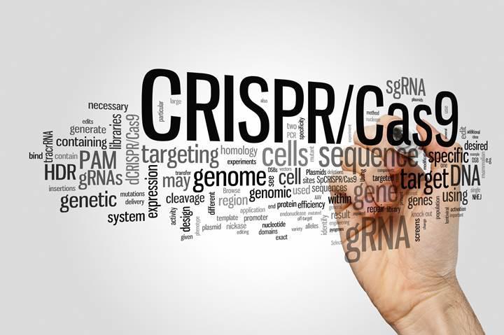CRISPR alanındaki ilk klinik deneme 2018'de yapılabilir