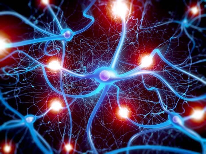 Sesleri ayırt etmemizi sağlayan beyin bölgesi bulundu