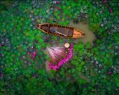 Vietnam'daki Mekong Deltası'ndaki gölette bir kadın. Sanatçı: helios1412