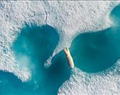 Inuktitut'taki kutuplarda büyük kutup ayısı Nanuk...  Sanatçı: Florian Ledoux