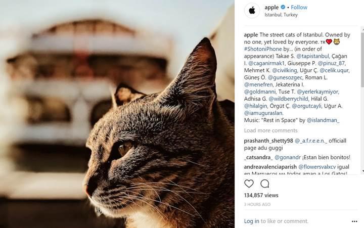 iPhone gözüyle İstanbul'un sokak kedileri