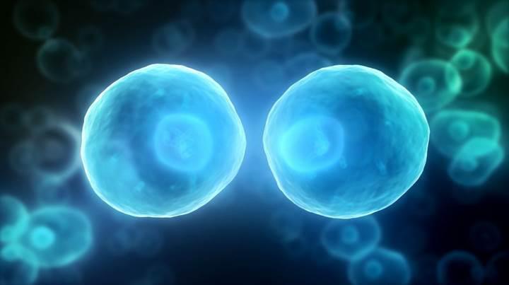 CRISPR kullanılarak Zika ve HPV tespiti yapıldı   Yeni CRISPR türleri