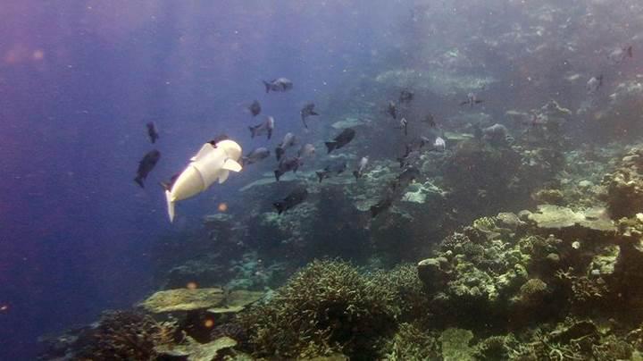 MIT'de geliştirilen robot balık ile okyanus canlıları incelenecek