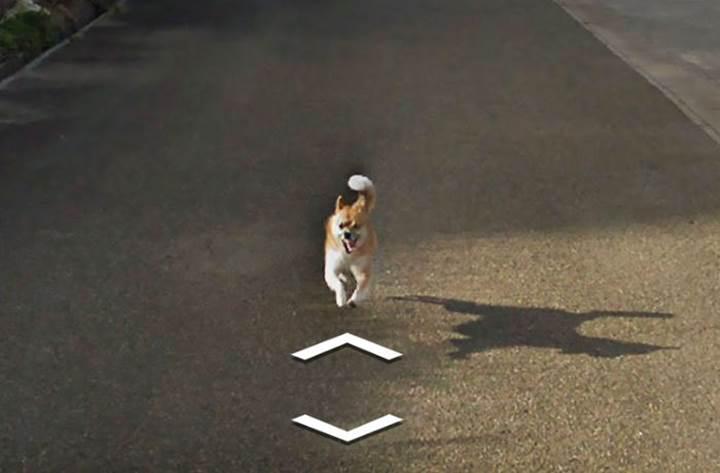 Küçük bir köpek tarafından kovalanan Google Street View arabasının zor anları
