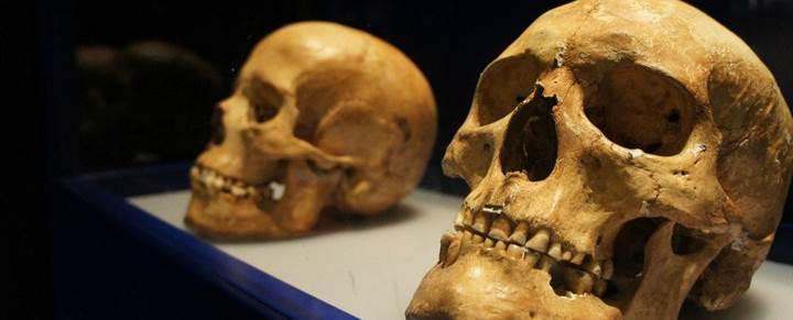 İnsanlığın Afrika'da pek çok atası vardı