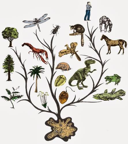 Canlılığın evrimini şekillendiren faktörler
