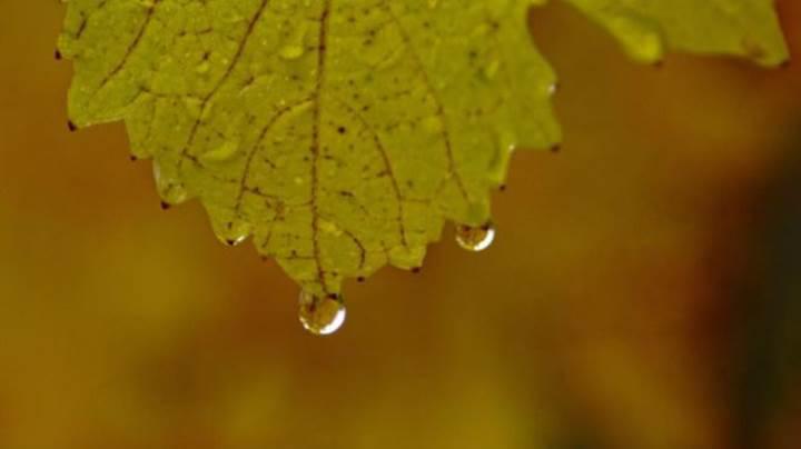 Yağmur neden bu kadar güzel kokuyor?