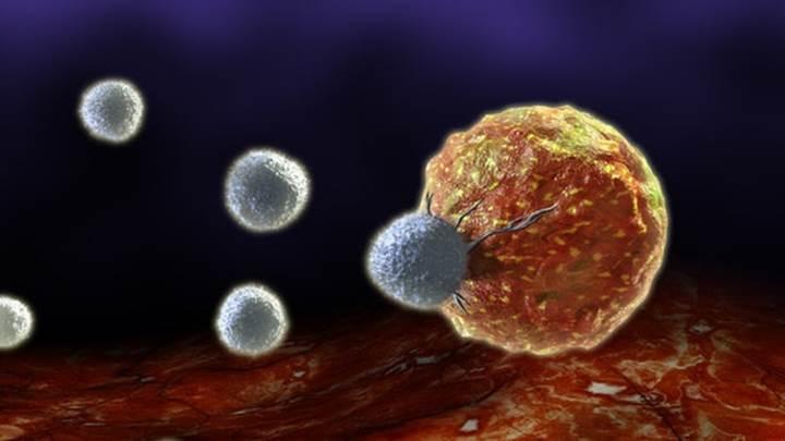 Saç dökülmesinden sorumlu gen kanser tedavisinde kullanılabilir