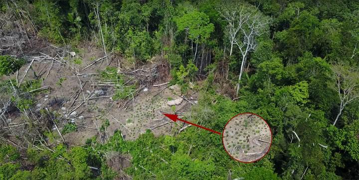 Brezilya'daki yerli kabile ilk kez görüntülendi