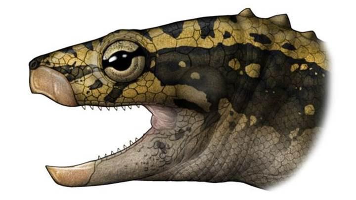230 milyon yıllık