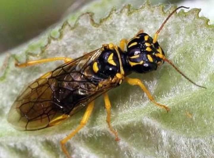 Arılar üzerinde yapılan araştırma, iş birliğinin evrimine ışık tutuyor
