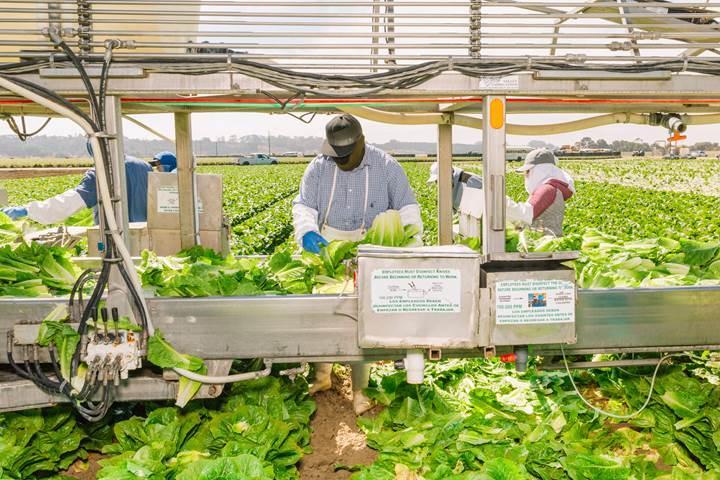Walmart gıda güvenliğini sağlamak için blockchain'den faydalanacak