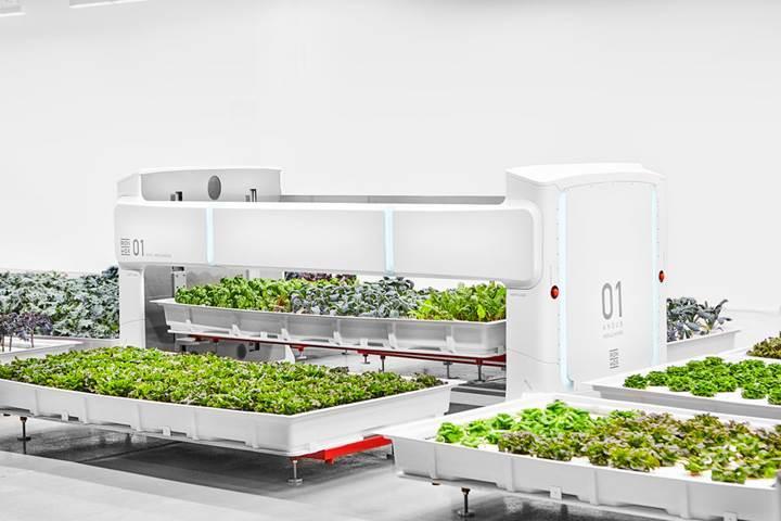 Robotların çalıştığı otonom çiftlik sebze üretmeye başladı