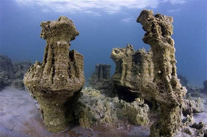Mucizelerle dolu Van Gölü'nde sadece inci kefalinin olmadığı ortaya çıktı