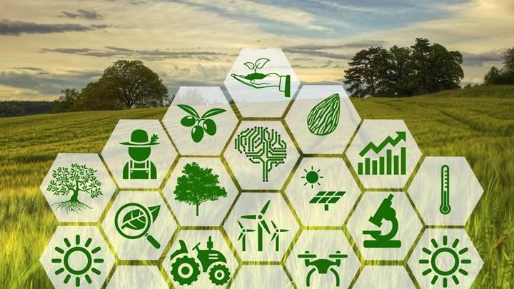 Binlerce yıllık mirasın kültürü olan zeytinden elde edilen verim, akıllı tarım teknolojileriyle birlikte artıyor