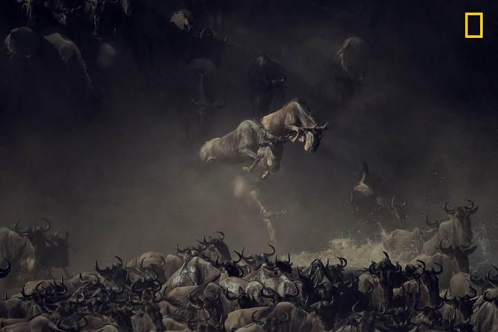 National Geographic 2018 yılı fotoğraf yarışmasından nefes kesen kareler