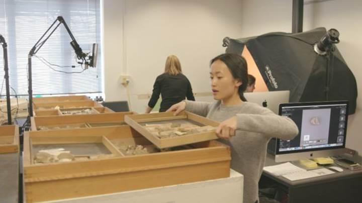Dijital müze fikri, herkesin milyonlarca fosile ulaşmasını sağlayabilir
