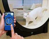 -The Little Cat<br/><br/>Kediler için akıllı koşu bandı