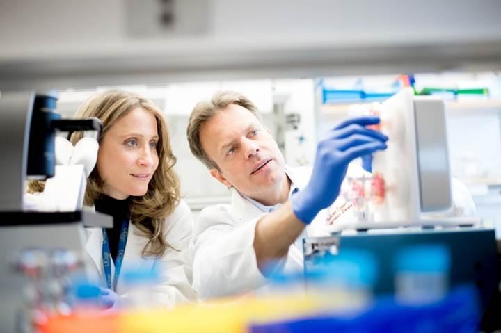 CRISPR sayesinde organ nakilinde doku reddi tarih olacak