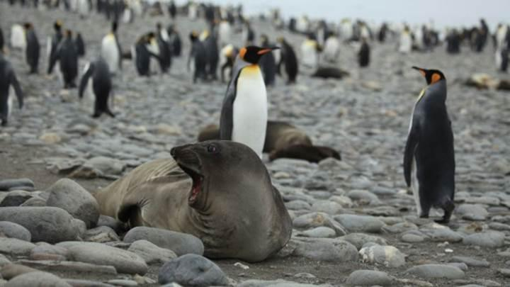 Penguen ve deniz fili dışkıları, Antarktika'ya can veriyor
