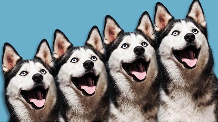 Evcil hayvanlar para karşılığında klonlanacak