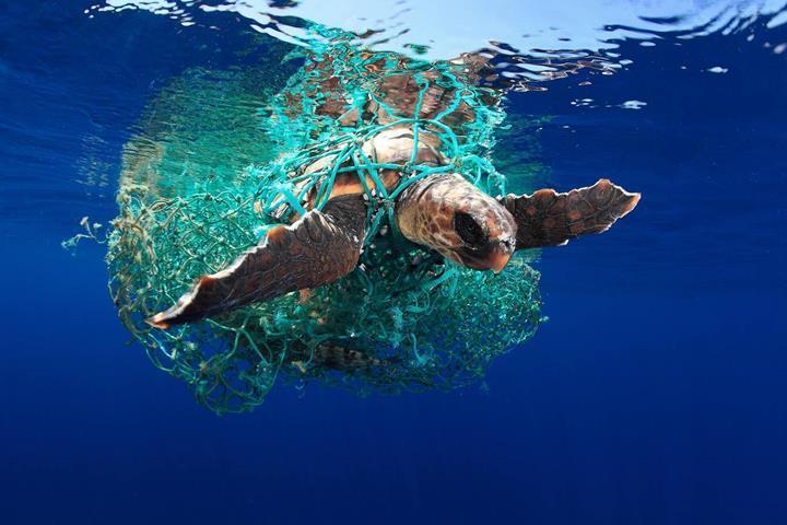 Denizlerdeki yabancı cisimlere dolanan hayvanların hayatı risk altında