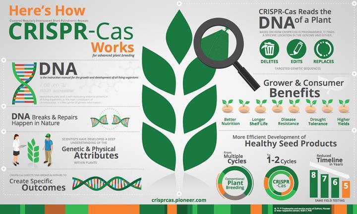 Genetiği değiştirilmiş bitkiler daha fazla miktarda karbon yakalıyor