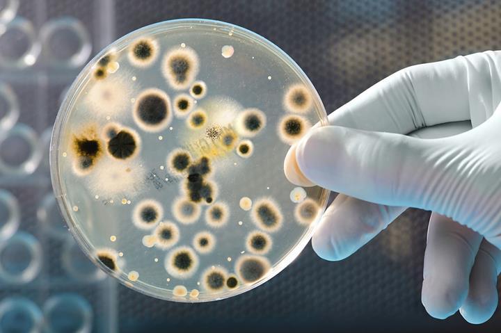 Bakteriler yardımıyla tuza dayanıklı bitkiler üretiliyor
