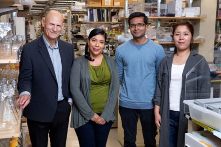 Düşük risk ve geniş uygulama alanı sunan gen düzenleme tekniği geliştirildi