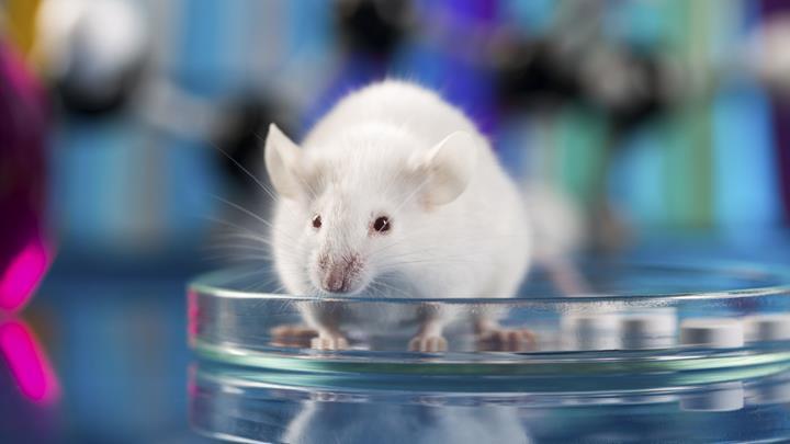 Yeni aşı farelerde Herpes enfeksiyonunu önlüyor