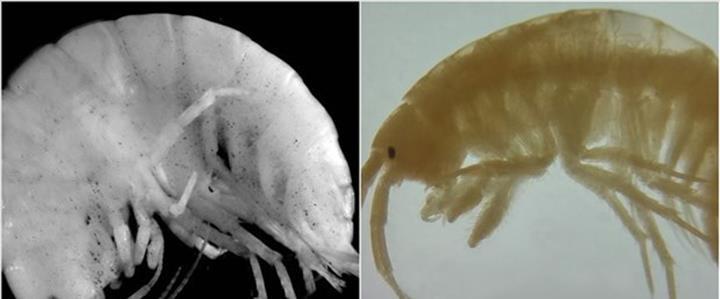 Türk araştırma ekibi, Mersin Anamur'da iki yeni canlı türü keşfetti