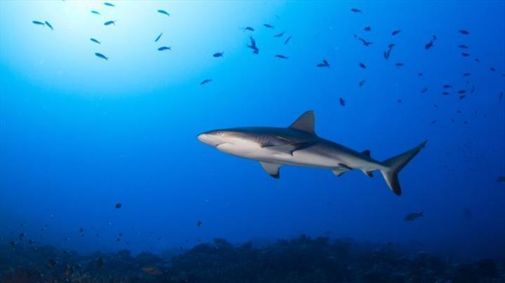 İklim değişikliği, okyanuslardaki oksijen seviyesini düşürüyor