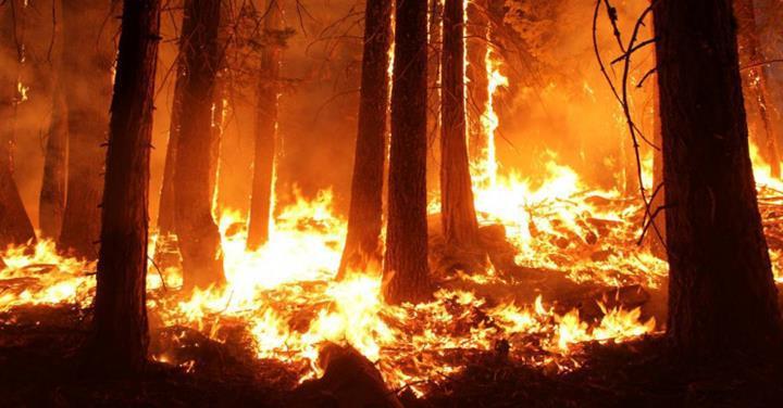 Avustralya'da devam eden orman yangınları, yıllık CO2 emisyon değerlerini allak bullak etti
