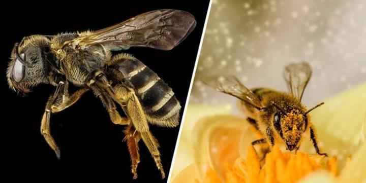 Arılar, Dünya üzerinde yaşayan en önemli canlılar olarak ilan edildi