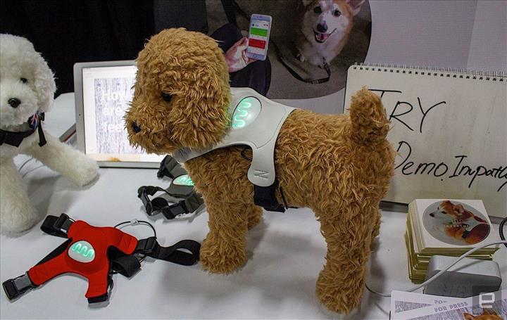 Köpeğinizin ruh halini bu cihaz ile anlayın